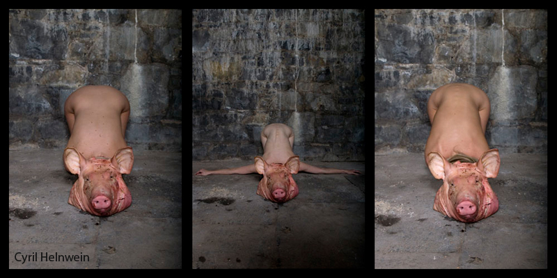Three Little Pigs (triptych)