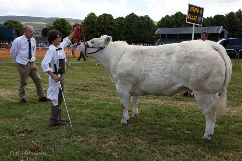 judging_a_cow_by_Cyril_Helnwein