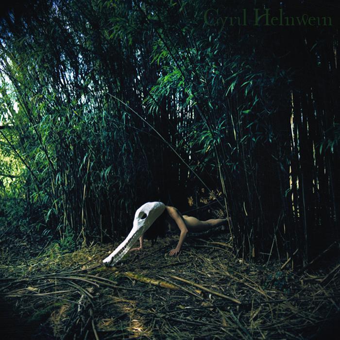 Crocodile in Bamboo